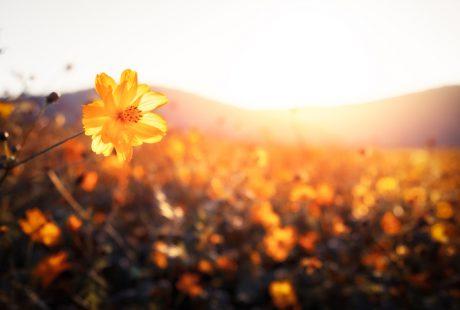 Finding Joy in Your Spiritual Work