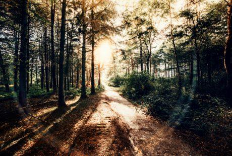 Pesach: Illuminate the Path