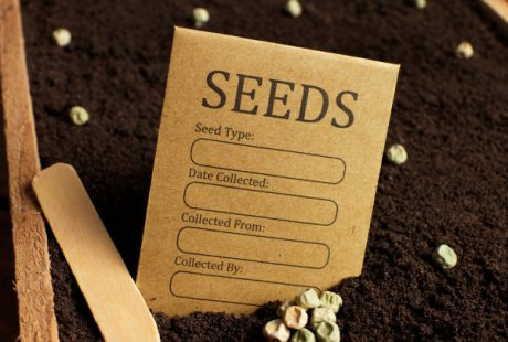 Aries: Plant Seeds for the Year